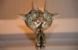 Roaming Cats